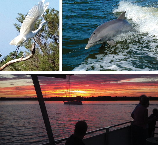 Captain Johnny's Dolphin Tours in Manteo Outer Banks
