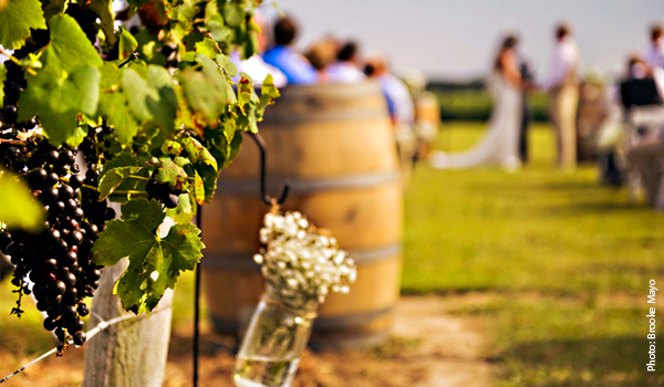 Sanctuary Vineyards - Currituck County