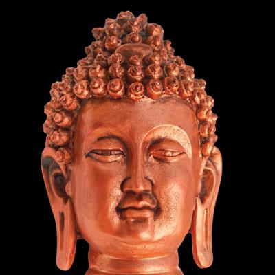 BuddhaLicious Corolla NC
