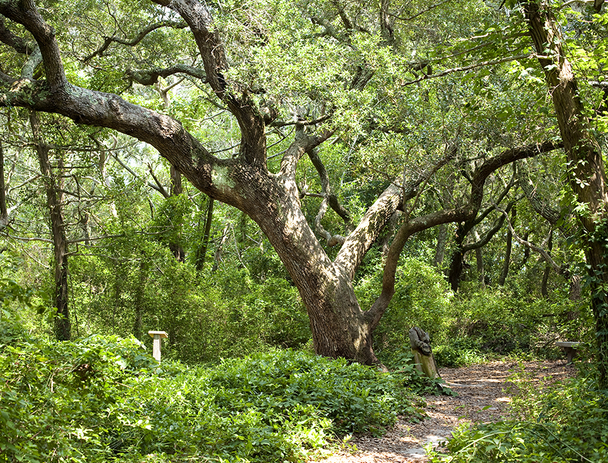 Hammock Hills Nature Trail in Ocracoke NC