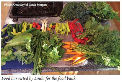 Food harvested by Linda for the food bank.