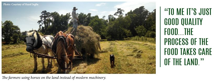 The farmers using horses on the land instead of modern machinery.