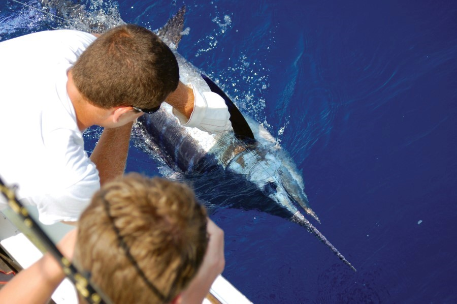 Father and son reeling in a blue marlin aboard the Albatross