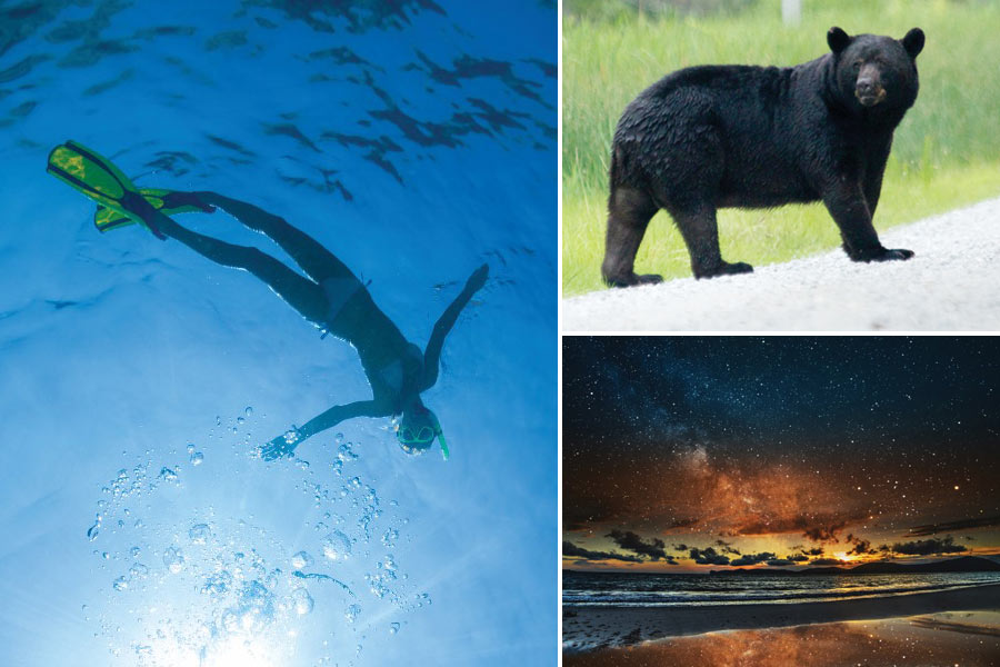 collage of snorkeling, bear and stars on the beach