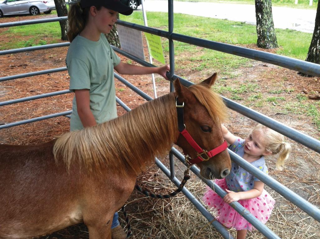 Young wild horse visiting with a toddler