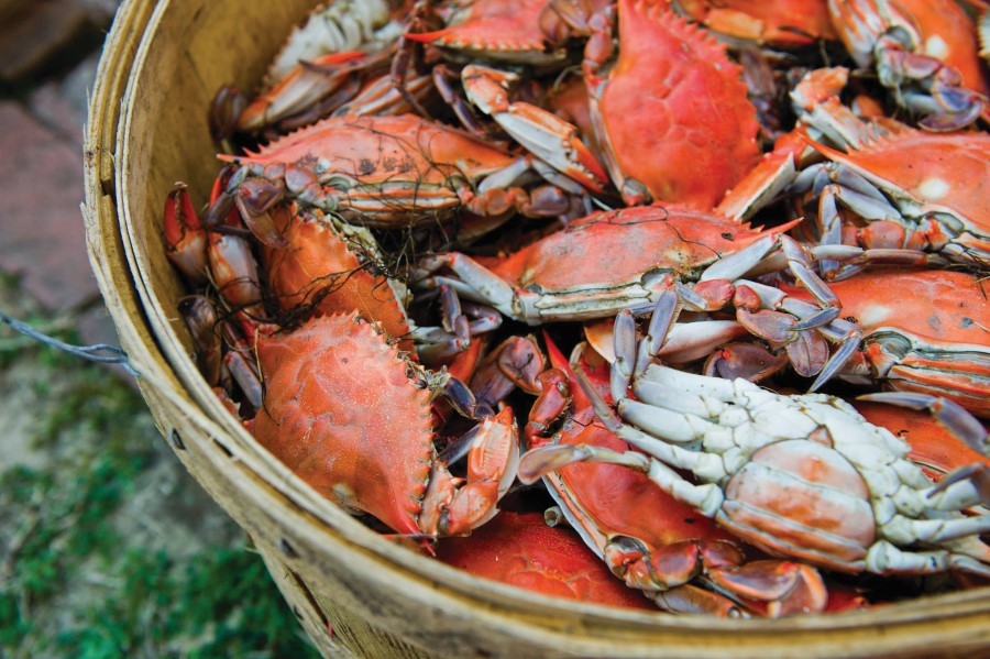 Cotton Gin Crab Daddy Festival