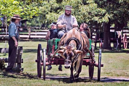 Ox-Cart Rides at Island Farm