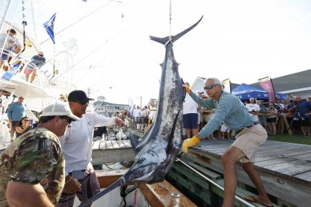 Annual Billfish Tournament