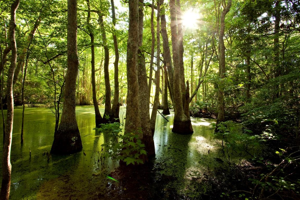 Nags Head Woods Nature Preserve