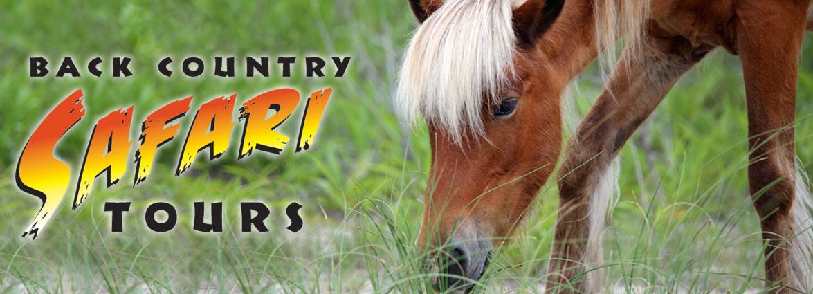 Back Country Wild Horse Safari