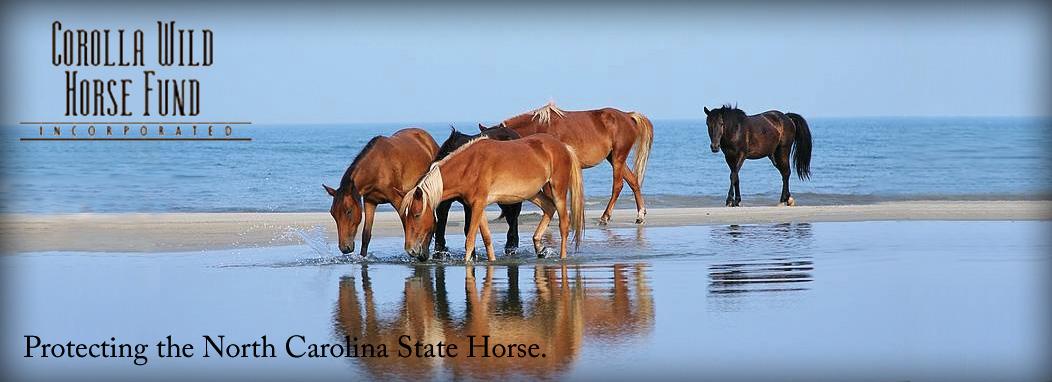 Corolla Wild Horse Museum