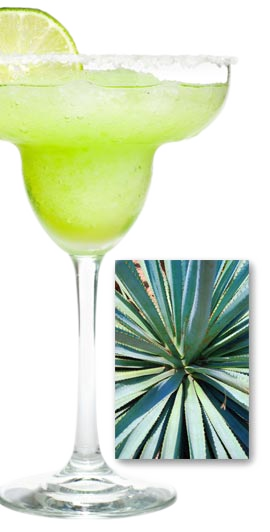 Agave Roja Tequila Drink