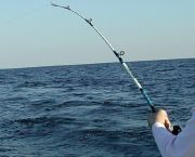 Inshore & Near Shore Trips - Backin' Up Sportfishing Charters