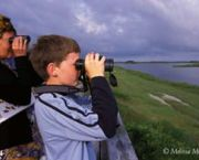 Birding at Pea Island - Pea Island National Wildlife Refuge