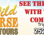 A Fabulous Way To See The Wild Horses - Wild Horse Adventure Tours