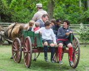 Ox-Drawn Wagon Rides - Island Farm
