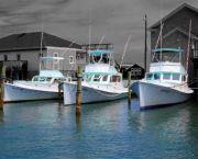 Charter Fishing Aboard the Albatross - Albatross Fleet