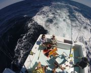 Shark Fishing - Reliance Hatteras Fishing Charters