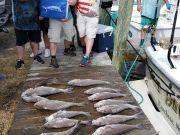 Fishin' Fannatic, Lots of Billfish and Tilefish Action