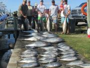 Oregon Inlet Fishing Center, Plump Yellow Fin Tuna, Dolphin, Black Fin Tuna and Wahooooooo!!