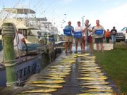 Oregon Inlet Fishing Center, Limits of Yellow Fin Tuna Limits of Dolphin and Billfish!!