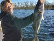 Oceans East Bait & Tackle Nags Head, Several Blue and a few Yellowfin! As well as stripers!