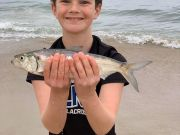 Oceans East Bait & Tackle Nags Head, Shad out of the Surf..... and epic Tuna Fishing!