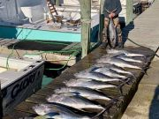 Oceans East Bait & Tackle Nags Head, Awesome offshore tuna bite, with great inland fishing!