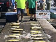 Bite Me Sportfishing Charters, Pretty Day with Dolphin