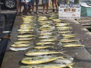 Bite Me Sportfishing Charters, Sails, Dolphin, Wahoo and a King - slick calm