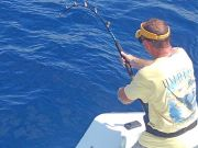 Tuna Duck Sportfishing, Blue Marlin Released