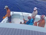 Tuna Duck Sportfishing, Blue Marlin Relese