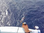 Tuna Duck Sportfishing, A Fine Day
