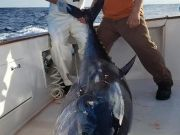 Fishin' Fannatic, Bluefin Season Is Here in the Outer Banks