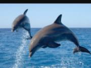 Wanchese Marina, Harbor Star Dolphin Cruises