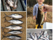 Oceans East Bait & Tackle Nags Head, Great offshore, sound, and inland fishing with some fish off the surf too!
