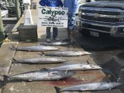 Calypso Sportfishing Charters, Wahoos!
