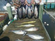 Pirate's Cove Marina, Got Fish.?.?
