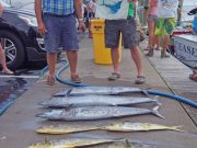 Tuna Duck Sportfishing, Fishing in Dorian's Swells