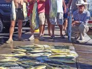 Tuna Duck Sportfishing, Limit of Mahi