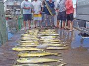 Tuna Duck Sportfishing, Dolphin!!