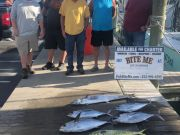 Bite Me Sportfishing Charters, Slightly Better for out Mountaineers