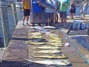 Tuna Duck Sportfishing, Good Action Today