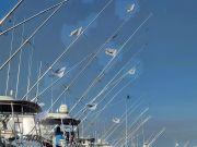 Pirate's Cove Marina, Tuesday's Catch