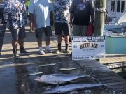Bite Me Sportfishing Charters, Quality not quantity
