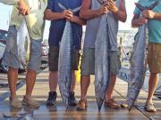 Tuna Duck Sportfishing, Good Fishing Again