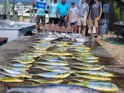 Pirate's Cove Marina, Tuna Tuesday!