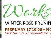 Elizabethan Gardens, Winter Rose Pruning Workshop