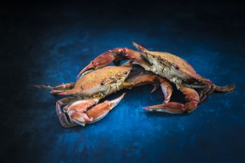 Dirty Dick's Crab House, Blue Crabs