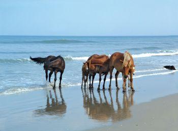 Win a Free Wild Horse Tour!